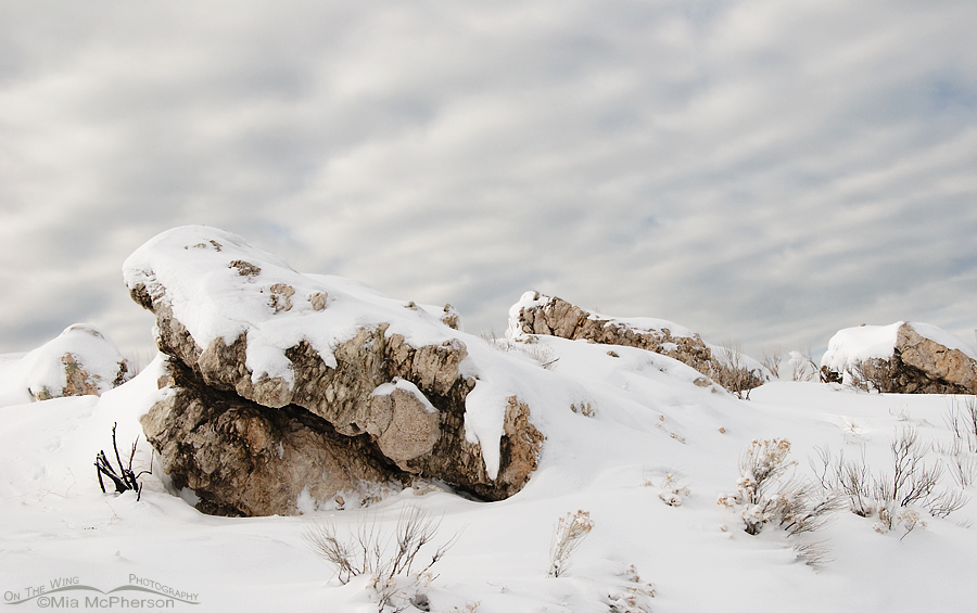 Snow-covered rocks on Antelope Island