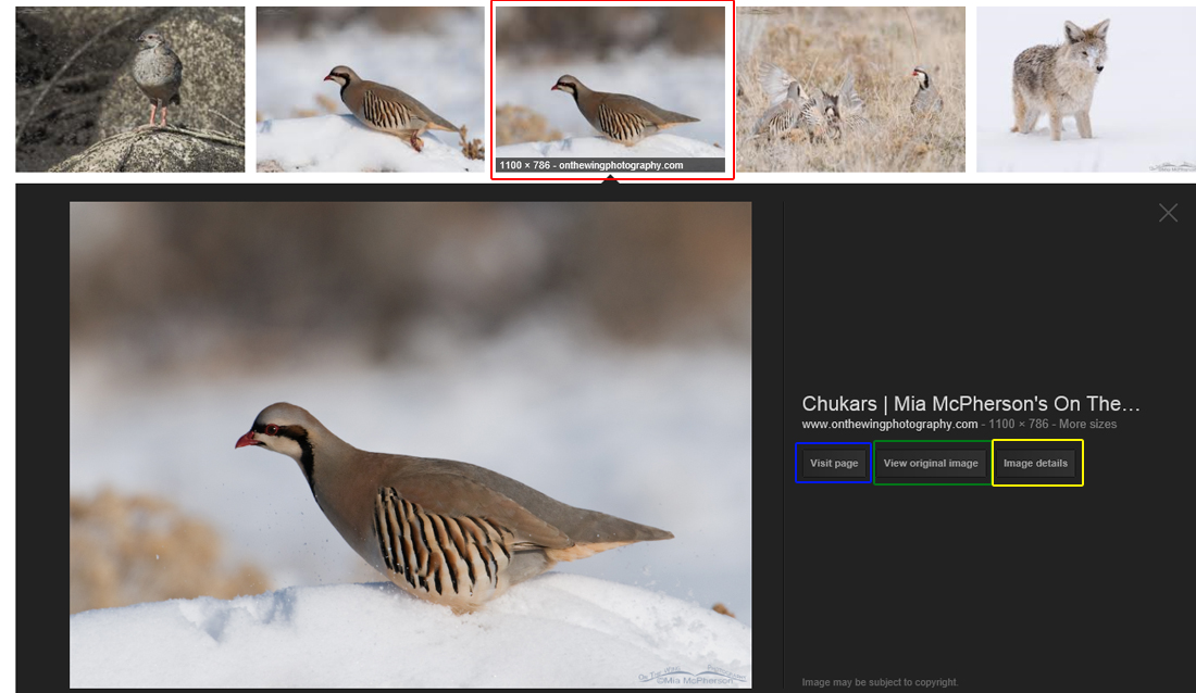 chukar-google-search-mia-mcpherson