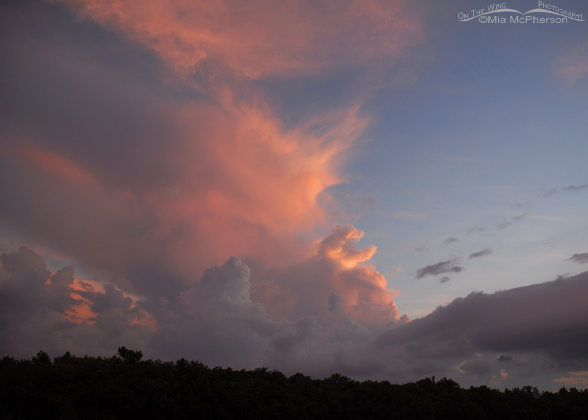 Pink Clouds at Fort De Soto before a storm