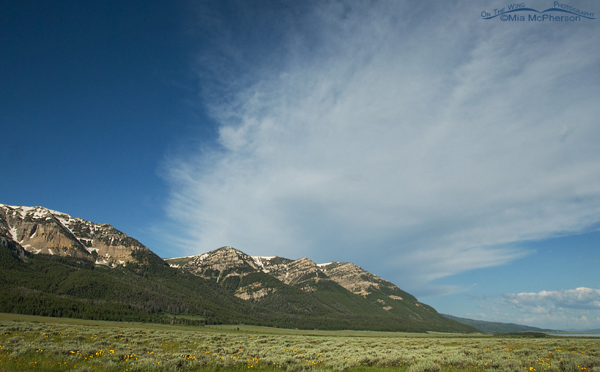 Blue skies at Red Rock Lakes National Wildlife Refuge, Montana