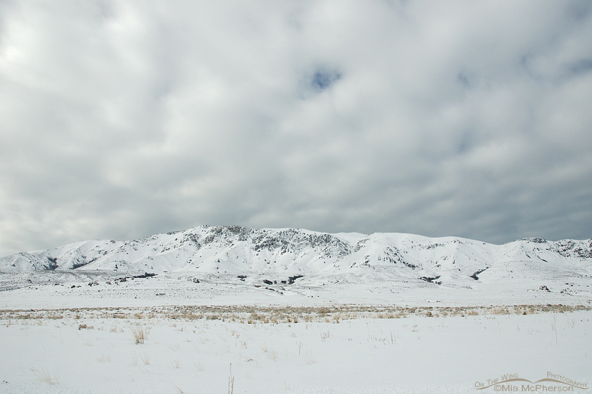 Antelope Island covered in snow