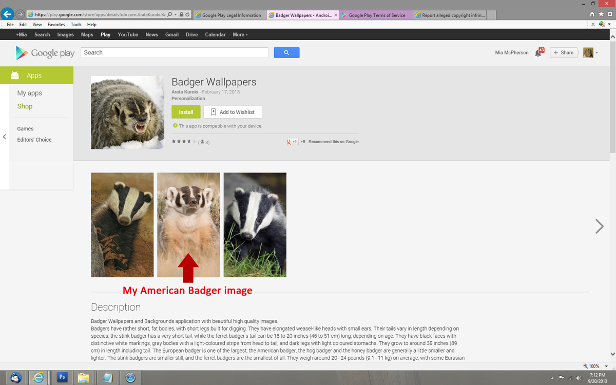 badger-wallpaper-google-play