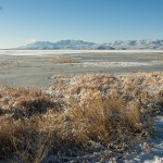 Bear River National Wildlife Refuge on a winter day