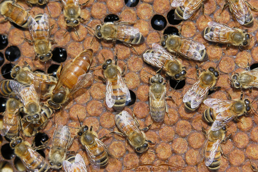 Workers Bees and the Queen