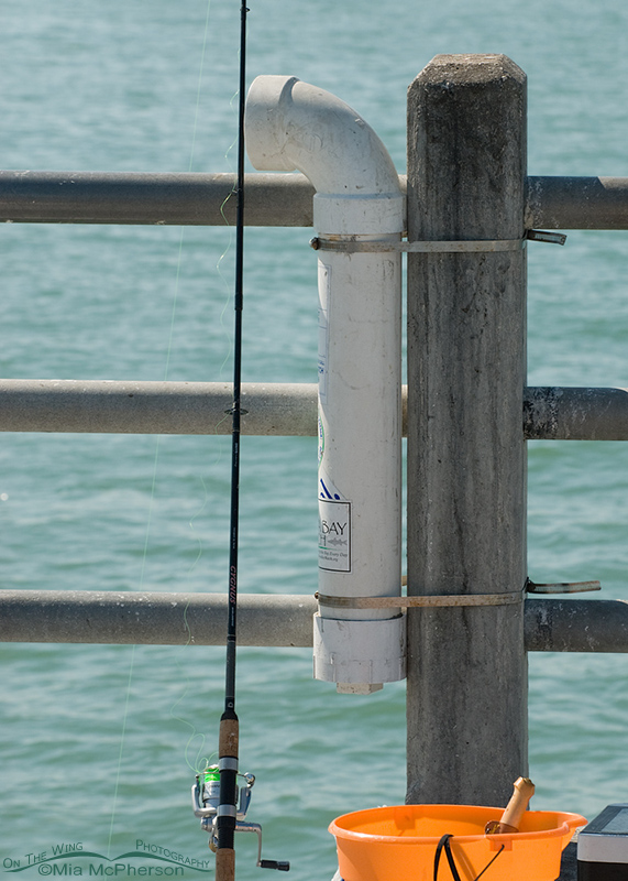 Use this for discarded fishing line, hooks and weights.