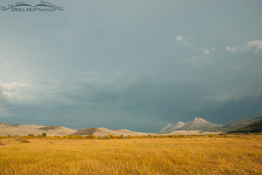 Stormy weather, mountains and golden grasses