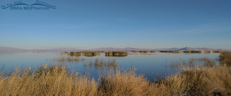 Calm water at Bear River Migratory Bird Refuge