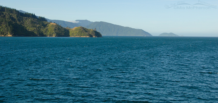 Sailing from Picton, New Zealand