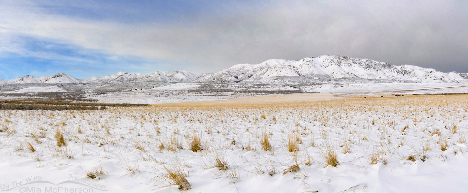 Snow covered Antelope Island on Christmas Eve