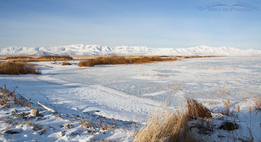 Bear River Migratory Bird Refuge covered in snow and ice