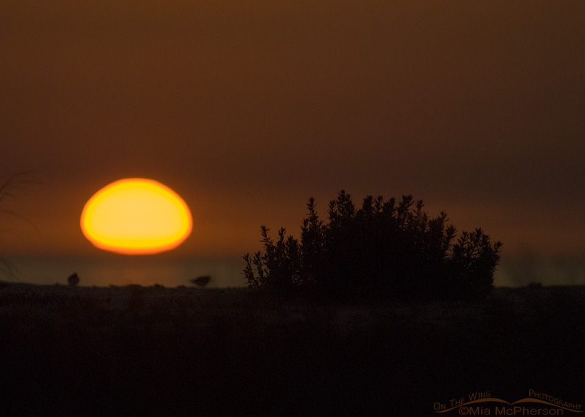 Sunset with birds at Fort De Soto