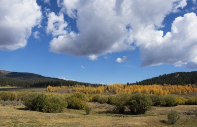 Fall colors in the Targhee National Forest