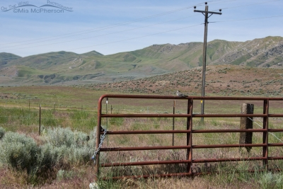 Common Nighthawk on a red gate in Box Elder County