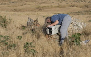 April releasing the rehabbed Burrowing Owl