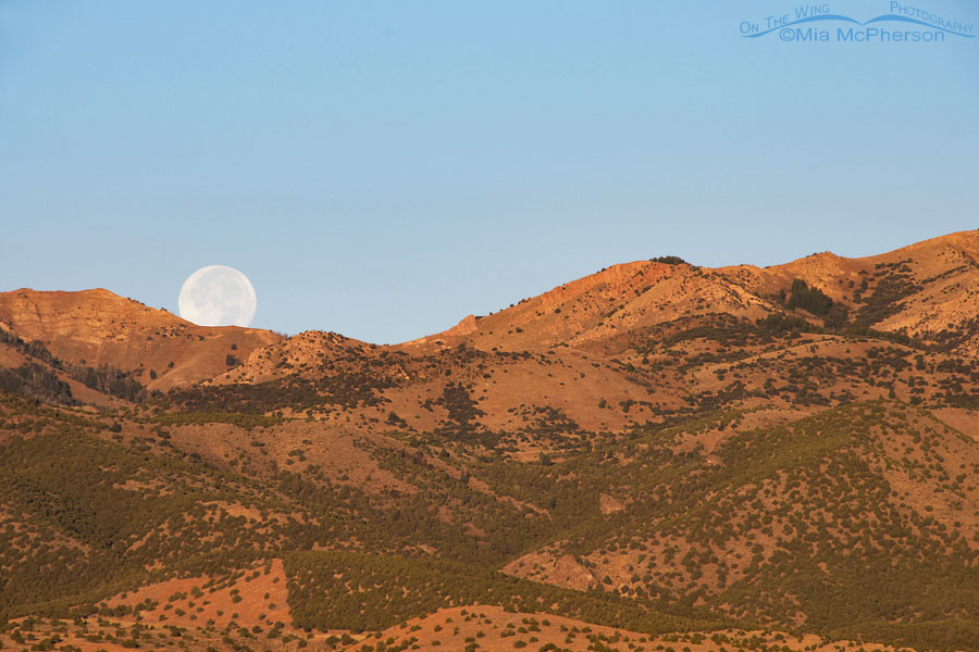 October 6, 2017 - Harvest Moon slipping behind the Stansbury Mountains