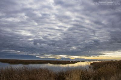 Heavy clouds of the marsh at Bear River MBR