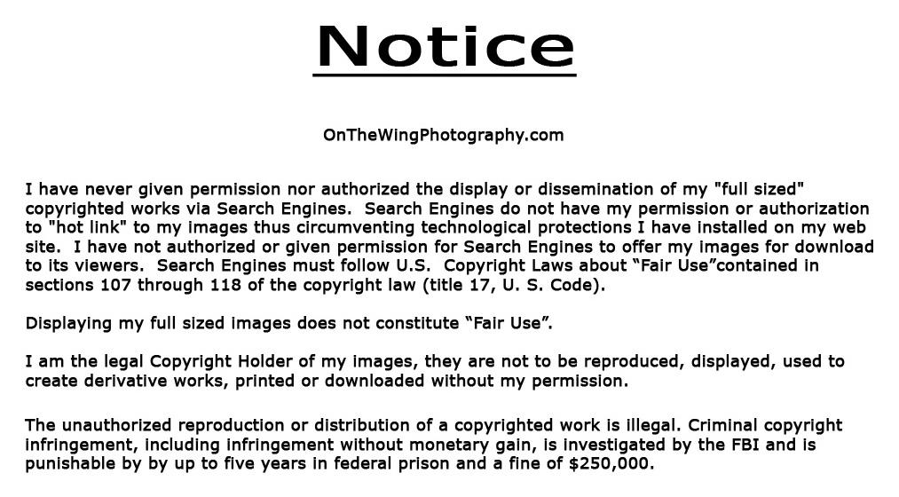 copyright-notice2