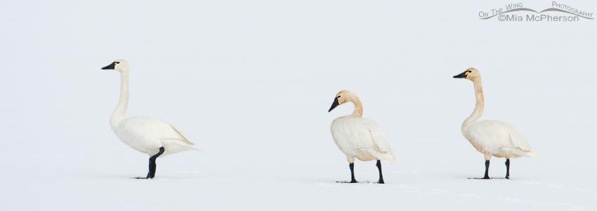 White on White - Winter's Delight