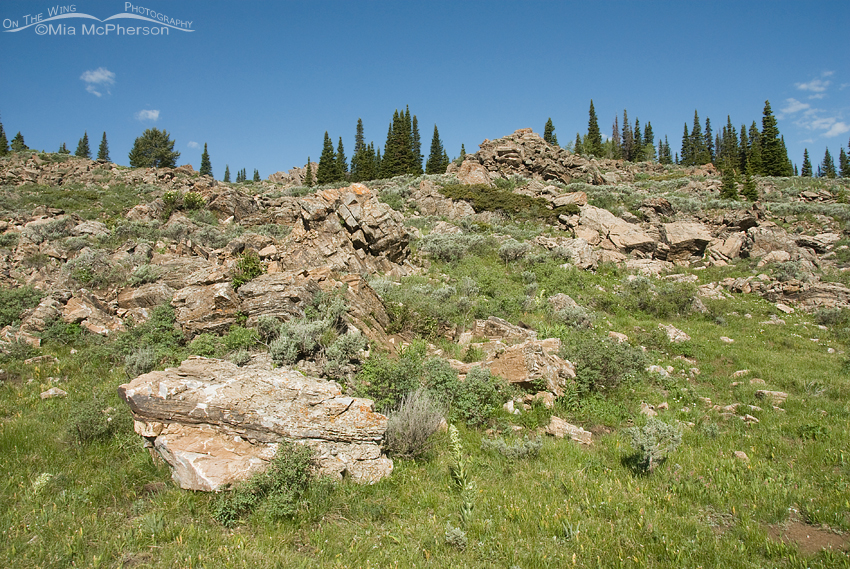 A rocky slope in Alaska Basin