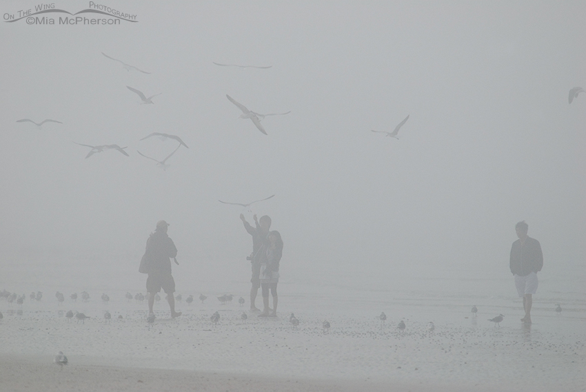 People and birds in the fog on the beach