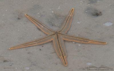 Sea Star in a lagoon
