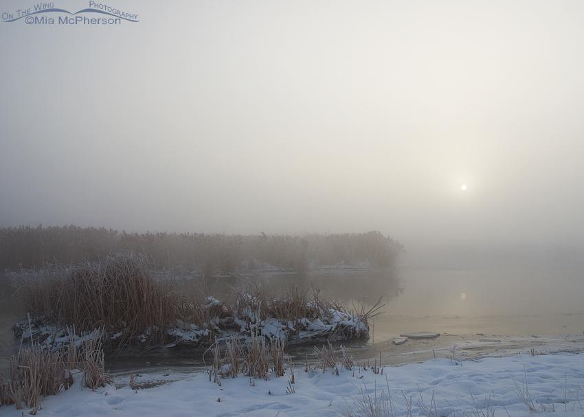 Farmington Bay WMA in a heavy fog