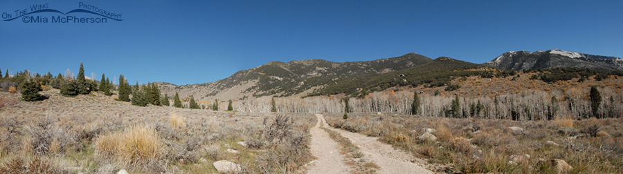 Road to the Shoshone camping area - Great Basin National Park