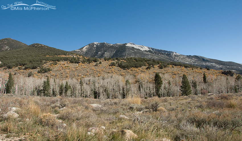 View from near the Shoshone Trail