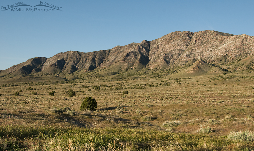 Mountains on the way to Fish Springs NWR
