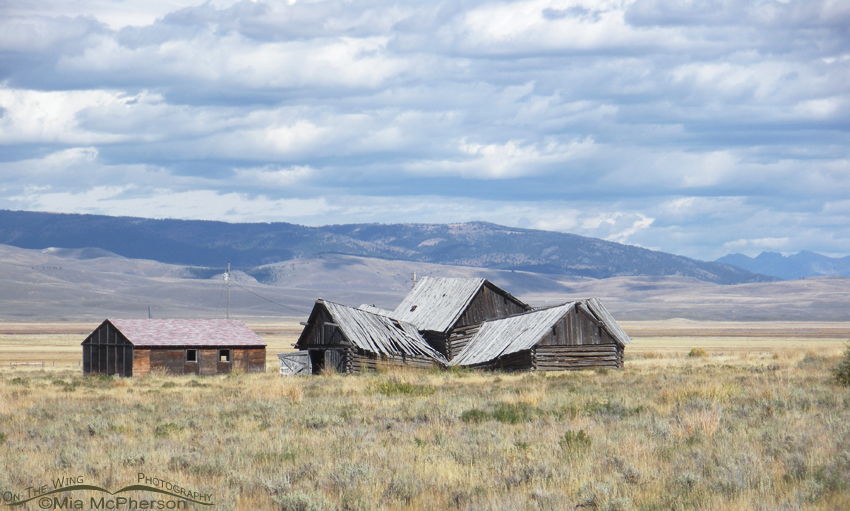 Tumbled down old barn on the way to Red Rock Lakes NWR