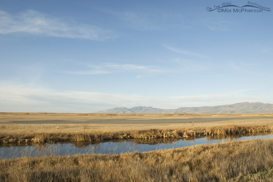 Bear River NWR from the auto tour loop