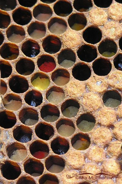 Honey comb with different colors of pollen visible in the cells
