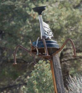 Wheelius metallica rustifaria - Metal spider