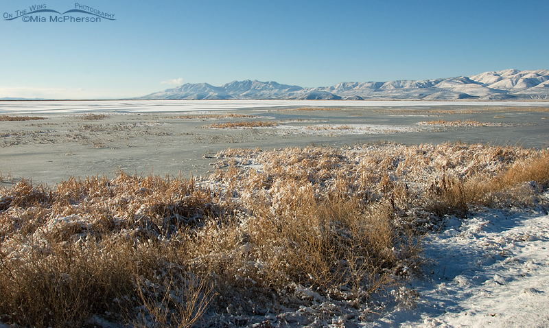 Christmas Day at Bear River National Wildlife Refuge looking towards Promontory Point