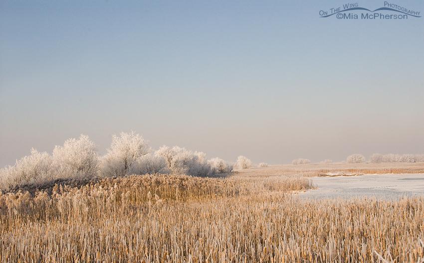 Frost covered Farmington Bay