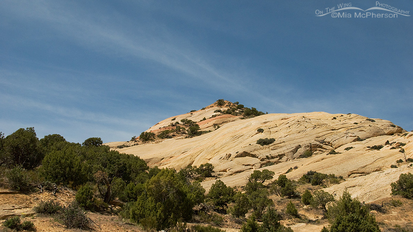 Junipers and petrified sand dunes at Red Fleet State Park