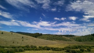 Targhee National Forest View