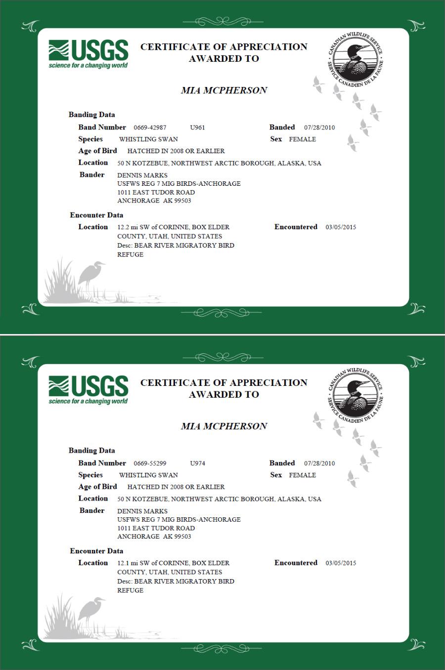 Tundra Swan banding info