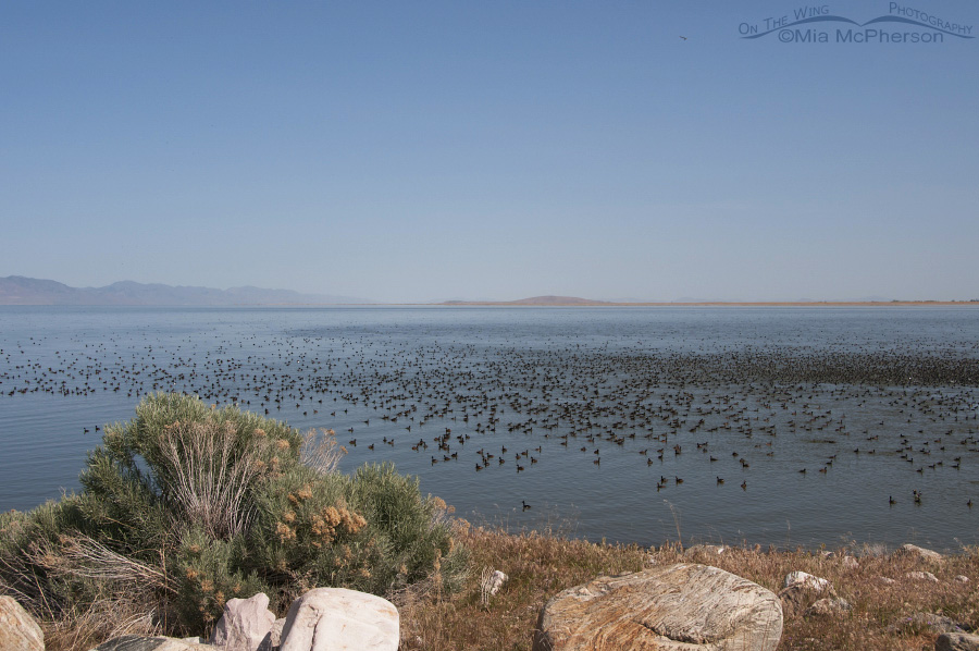Great Salt Lake as seen from the Antelope Island Causeway on May 13, 2012