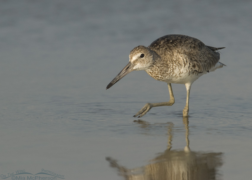 Willet trying to sneak by
