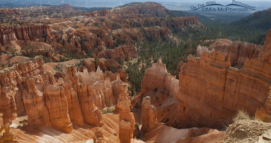Looking down into Bryce Canyon National Park