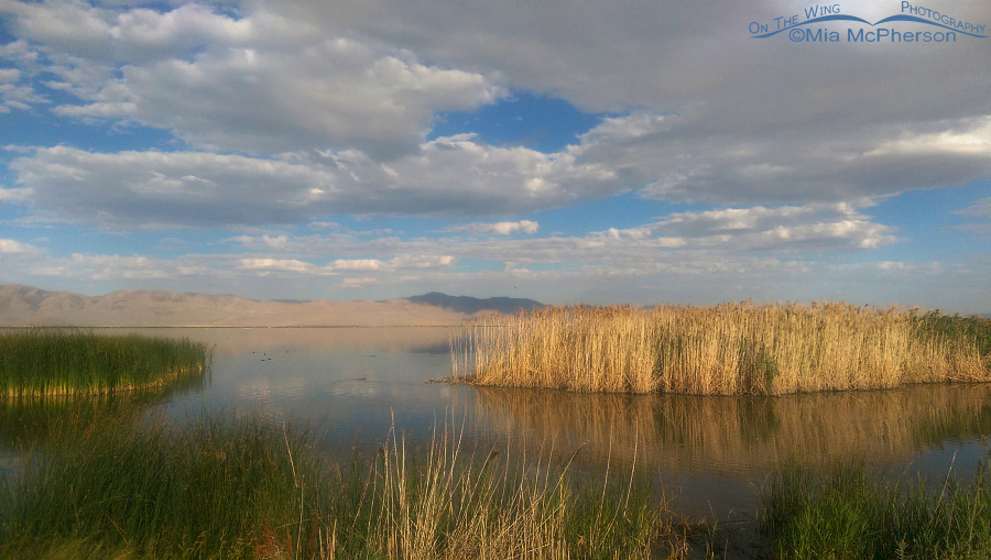 A September morning at Bear River Migratory Bird Refuge
