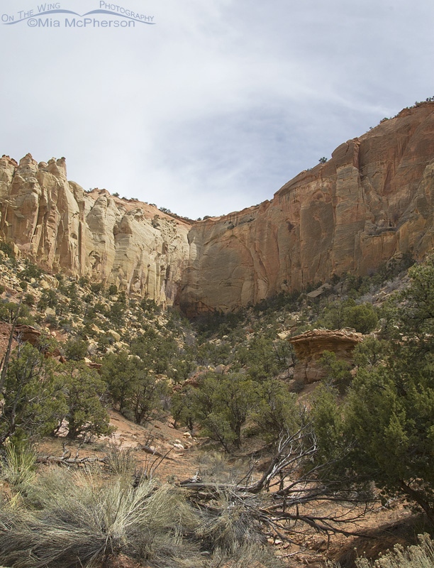 Looking up a side canyon on Burr Trail