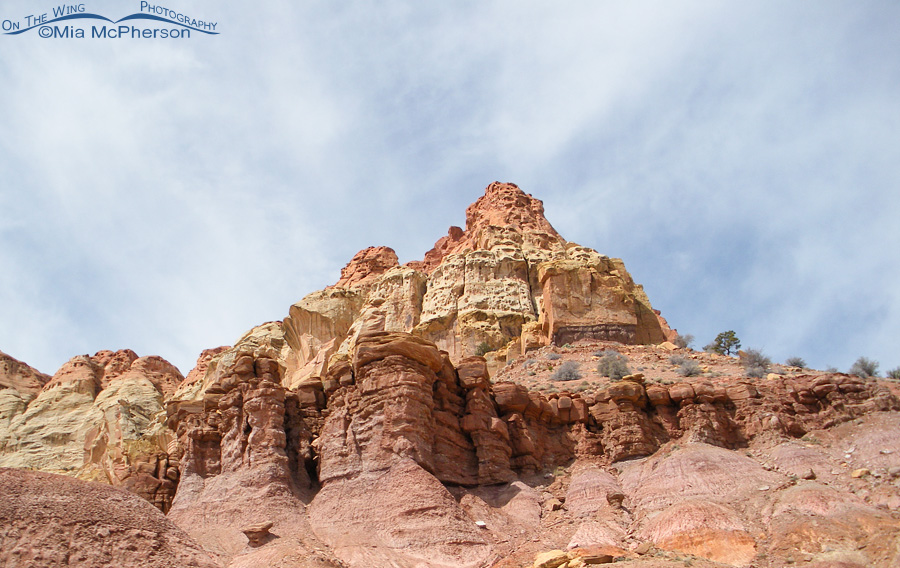 A Sandstone Crown at Burr Trail