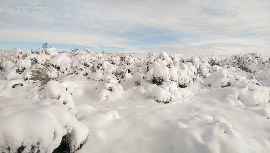 White Rock Bay campgrounds covered in snow