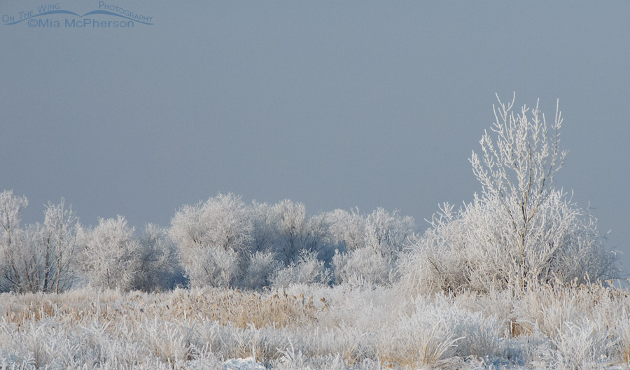 Frosty Trees at Farmington Bay