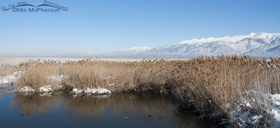 A view of the Wasatch Mountains from Farmington Bay WMA