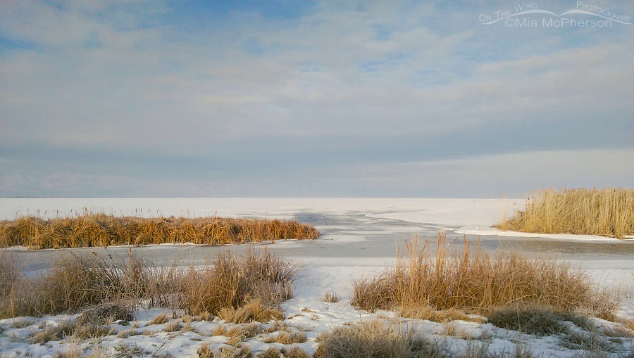 A Wintry View of Bear River Migratory Bird Refuge