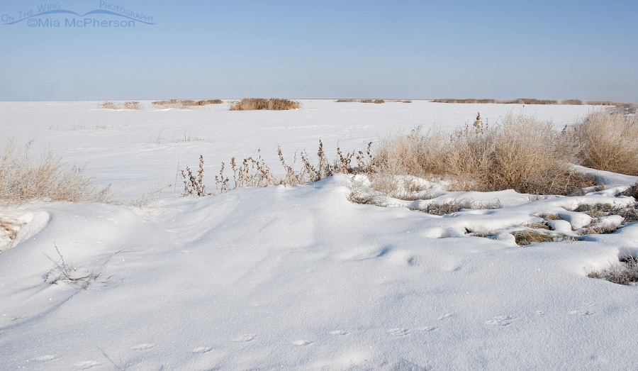 A snow covered view of Bear River Migratory Bird Refuge