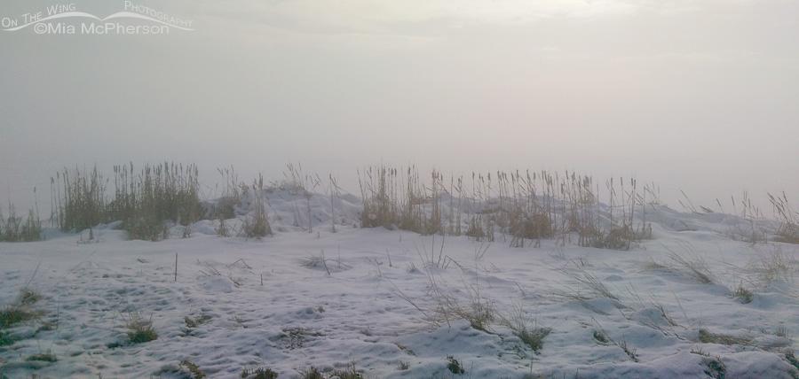 A very foggy morning at Farmington Bay WMA
